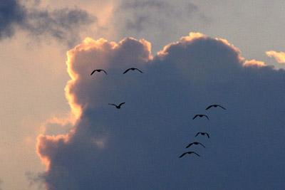 雲の微笑み