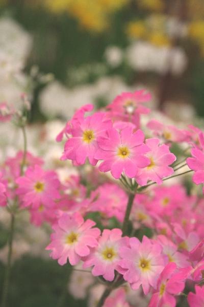 keyaki-001363s.jpg