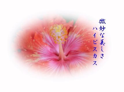 keyaki-001382s.jpg