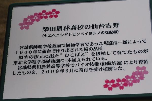 keyaki-001503s.jpg