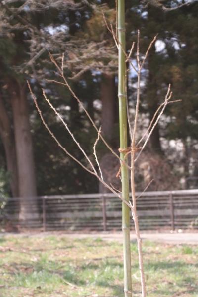 keyaki-001504s.jpg