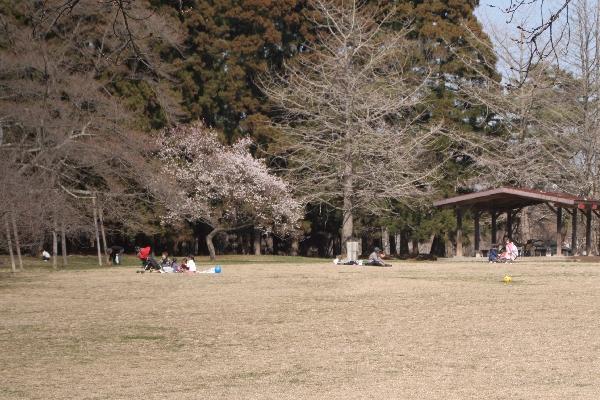 keyaki-001508s.jpg