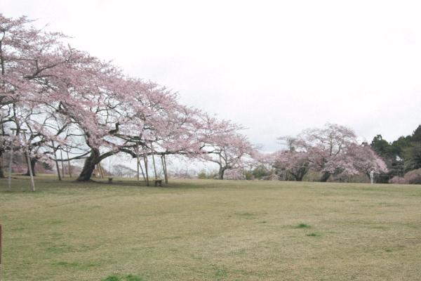 keyaki-001546s.jpg