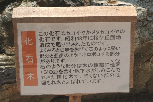 keyaki-001623s.jpg