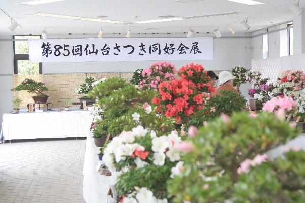 keyaki-001747s.jpg