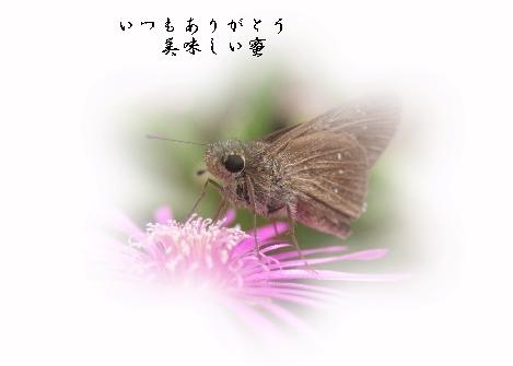 keyaki-001906s.jpg