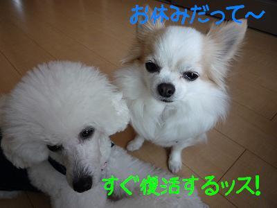 P1000392_1.jpg