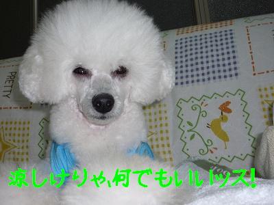 P1000961_1.jpg
