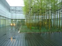 中庭にある竹林