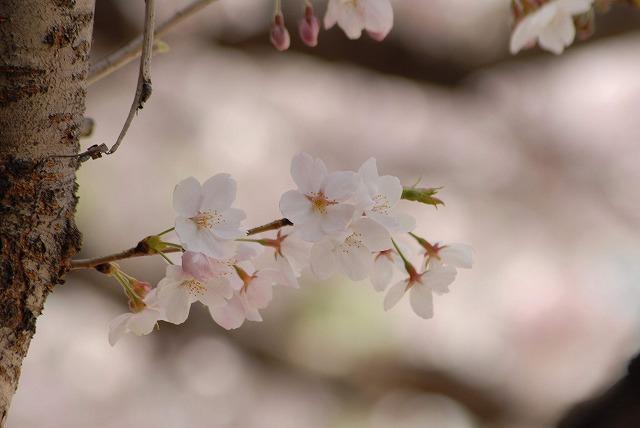 春日公園12