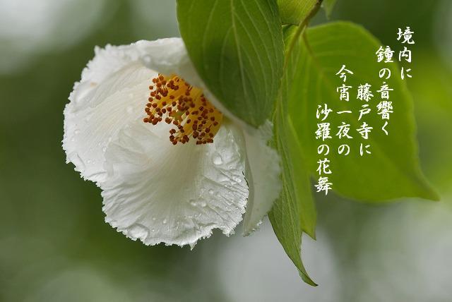 沙羅の花6-1