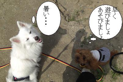 CIMG7503  くるみちゃん