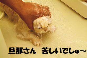 コタ丸洗い