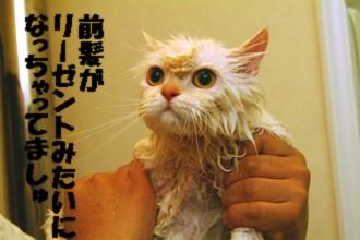 コタお風呂上がり
