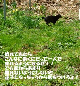 7チャ―一人歩き