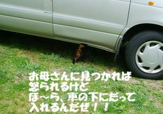 9チャ―車に入る