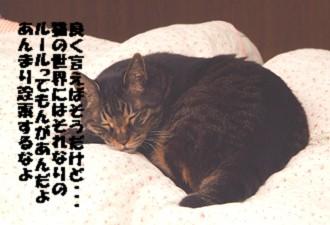 7チャ―寝る