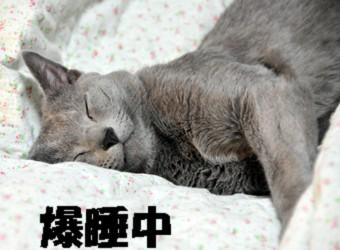 2シンの寝顔