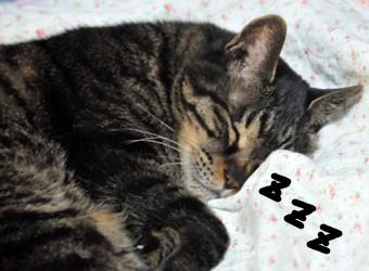 3チャ―の寝顔