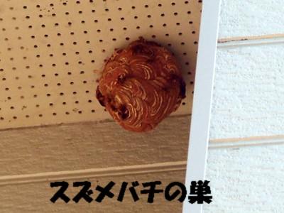 すずめばちの巣