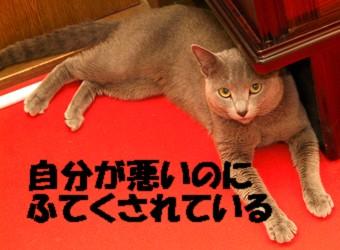 DSCF1076.jpg