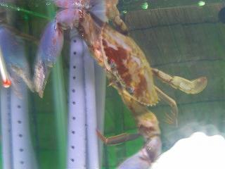 蟹H20.5.5