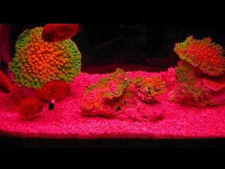 珊瑚礁H20.5.5
