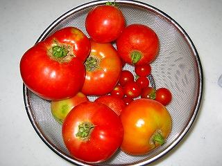 トマト収穫h20.7.10