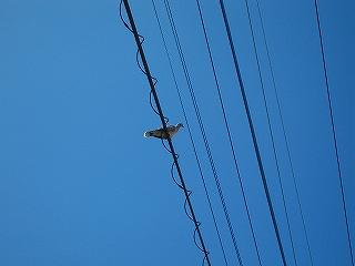 鳥H20.7.20