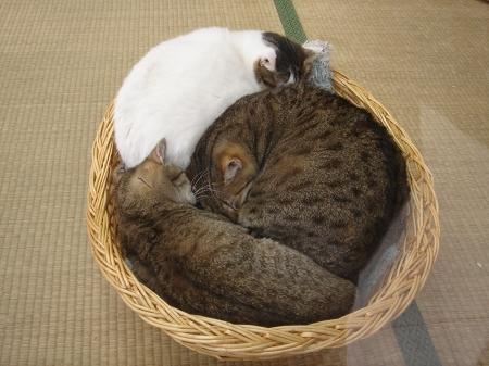 猫だパーク♪に行って来ました! (7)