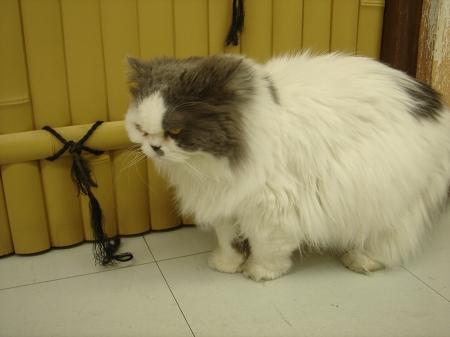 猫だパーク♪に行って来ました! (8)