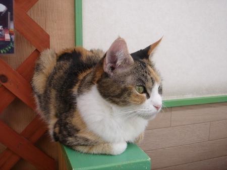 猫だパーク♪に行って来ました! (13)