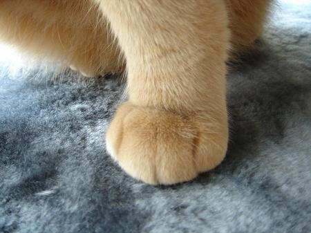 萌える足♪ (1)