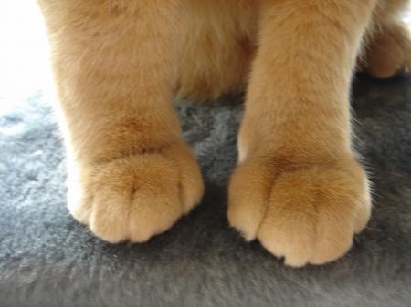 萌える足♪ (2)