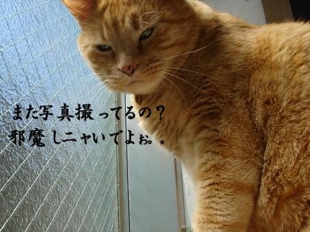 お日様大好き! (1)