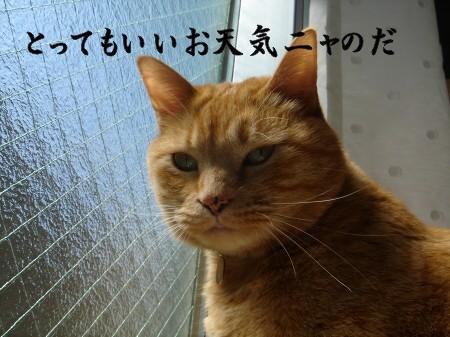 お日様大好き! (2)