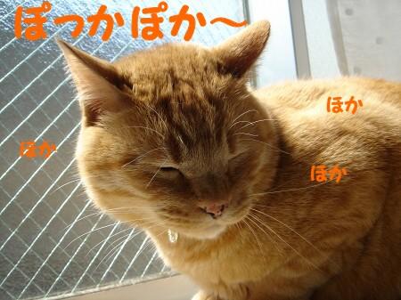 お日様大好き! (3)