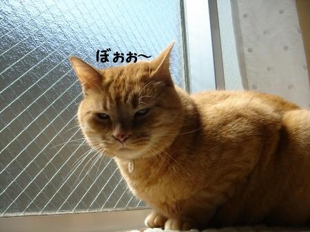 お日様大好き! (4)