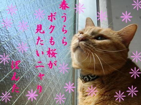 お日様大好き! (5)