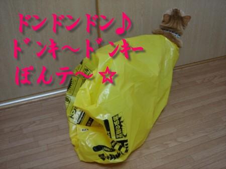 ドンキ・ぽんテ~♪ (4)