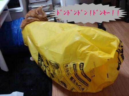 ドンキ・ぽんテ~♪ (5)