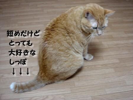 踏んじゃったらどうしよぉ~!? (2)