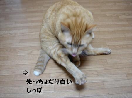踏んじゃったらどうしよぉ~!? (4)