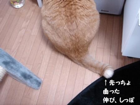踏んじゃったらどうしよぉ~!? (6)