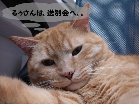 帰りを待っている猫。 (1)
