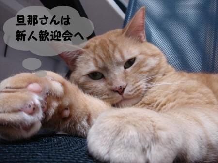 帰りを待っている猫。 (2)