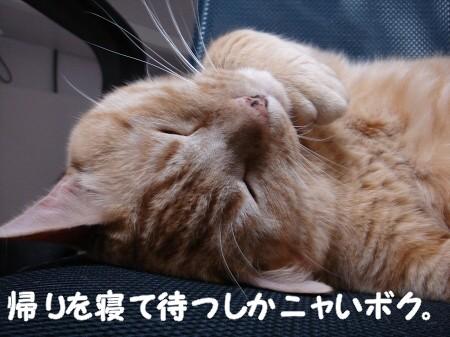 帰りを待っている猫。 (3)