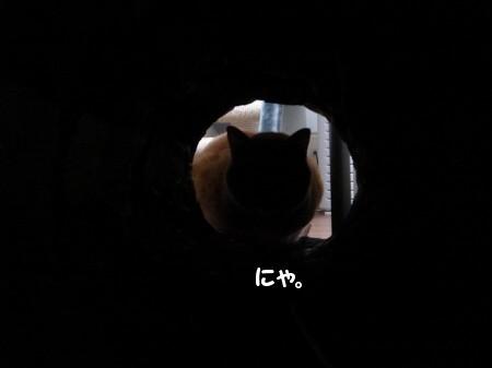 トンネルの魅力! (1)
