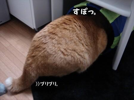トンネルの魅力! (5)