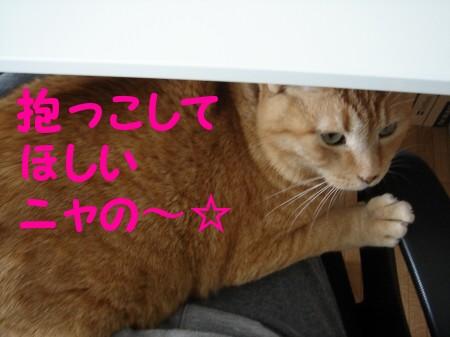 抱っこしてして (2)